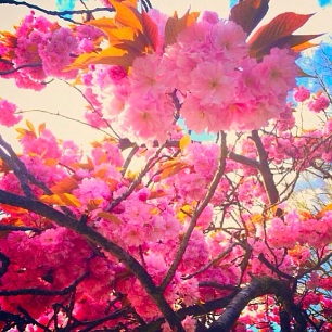 spring blooms in North London