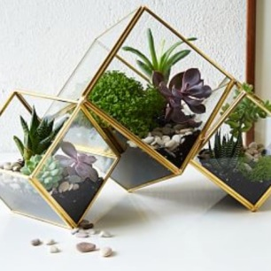 diamond terrarium set, West Elm